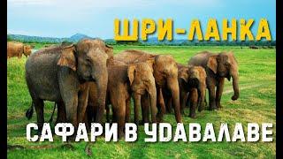 Шри-Ланка :: 600 слонов парка Удавалаве. Как доехать, стоимость сафари, лучший отель!