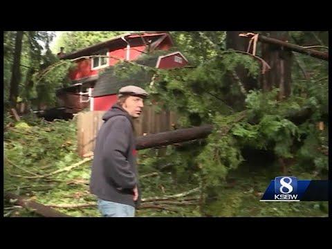 Tall trees  crash into Boulder Creek homes