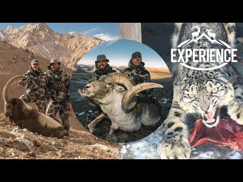 TAJIKISTAN: Snow Leopard, Ibex, Marco Polo 4k