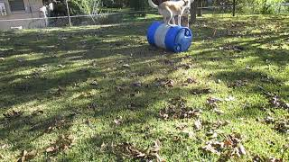 Foster lab Charles learning Barrel rolling