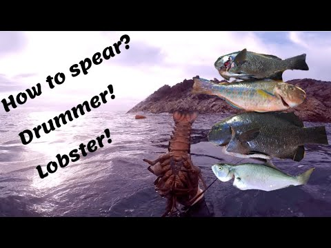 Spearfishing NSW: How To Vol.1 Lobster And Drummer.