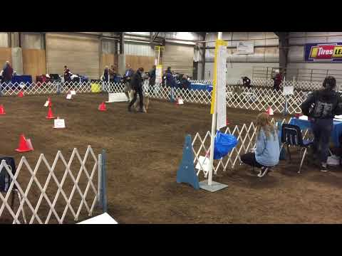 akc-rally-master---linn-county-kennel-club-2/22/2020-score-of-100
