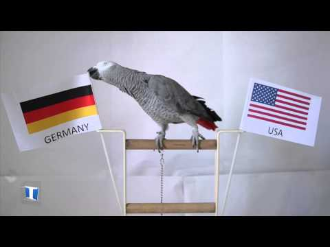 Nico the Parrot prediction: Germany vs US