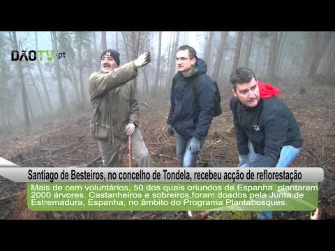Tondela - Voluntários portugueses e espanhois plantaram 2000 árvores em Santiago de Besteiros