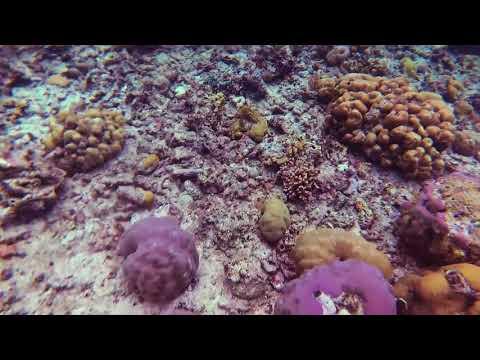 Bunaken Snorkeling Trip   Manado Tua 22 Mar 2018
