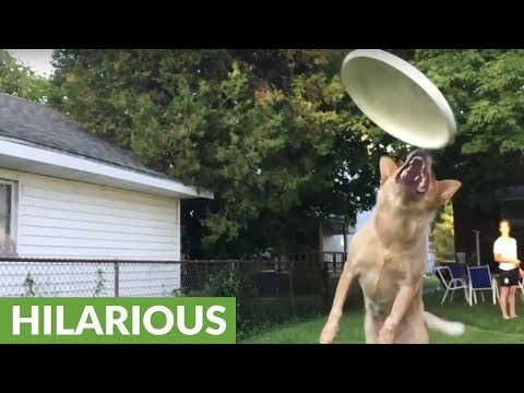 Slow motion footage captures dog's epic frisbee fail