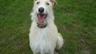 Dogs Trust Newbury: Friends!