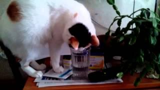 Кошка пьёт воду из стакана