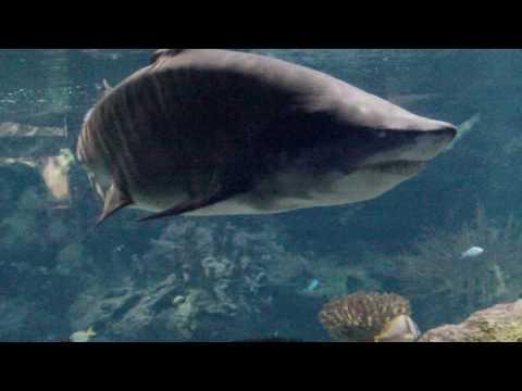 Oceanarium rekiny.MOV