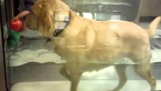 Leo At Torrington Orthopaedics Rehabilitation