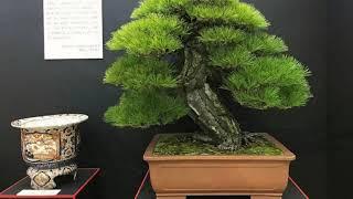 39TH NIPPON TAIKAN TEN EXHIBITION, JAPAN 2019 part 1