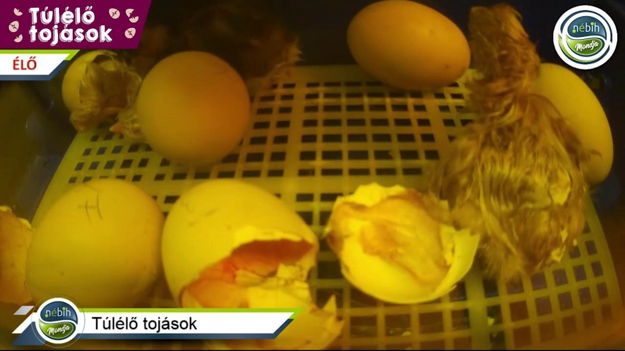 hogyan lehet gyógyítani a tojás helmintákat