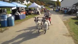 team snazzy goat at the vermont sheep and wool festival 2015