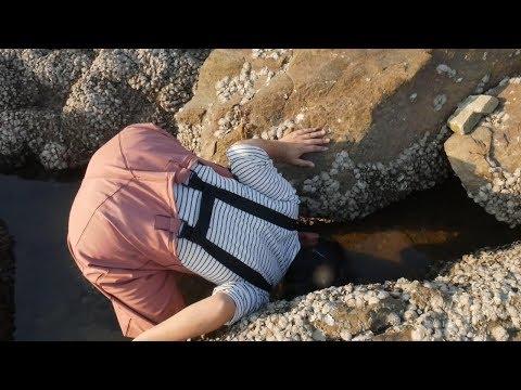 小章赶海到上次捉鳗鱼的礁石区,竟发现很多生猛海鲜!统统拿下。 【赶海小章】