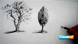 Diễn họa cây bằng bút chì