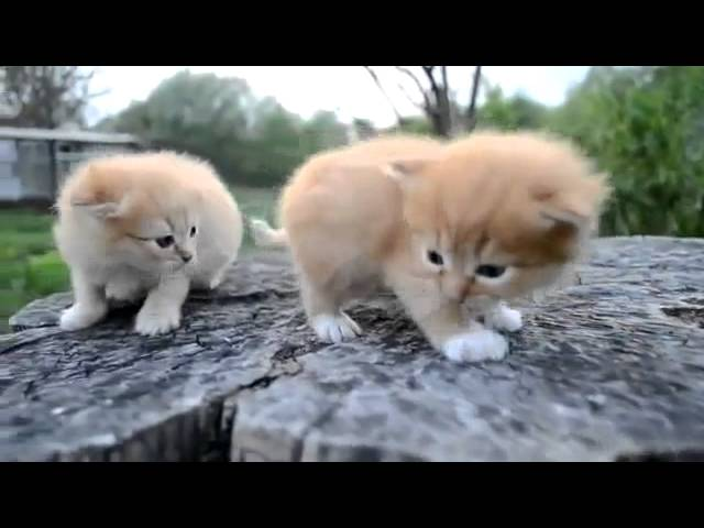 анимал планет милые котята и щенки