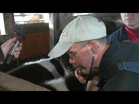 VetsOnCall  Pete Ostrum child 'Wonka' star devotes life to animals  farms