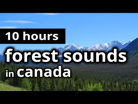 FOREST SOUNDS - CANADIAN Boreal FOREST in Summer SLEEP SOUNDS for sleep, relaxation