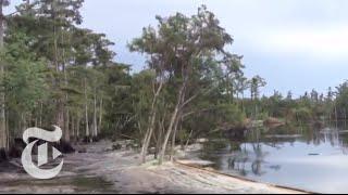 Sinkhole in Louisiana Swallows Trees - Caught on Tape 2013