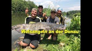 Welsangeln An Der Donau / Waller Workshop / Köderfisch, Wallerholz, Tauwurm, U-Pose Mit Stefan Seuß