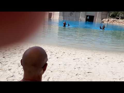 Dolphin Bay, Atlantis Dubai