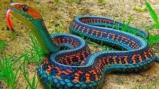 Самые ядовитые змеи мира. Дикая природа. Документальный фильм Discovery.