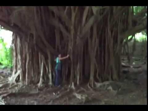 Climbing a Banyan Tree