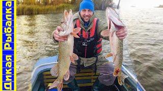 Осенняя ловля щуки спиннингом. Секреты успешной рыбалки на джиг | Дикая рыбалка
