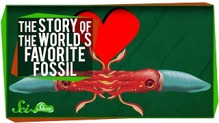 The Story of the World's Favorite Fossil