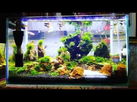 Aquascape Design guppy tank with simple moss aquascape design - youtube