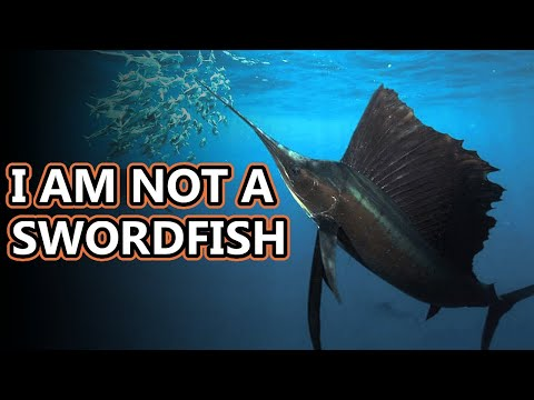 Marlin Facts: Also Swordfish Facts | Animal Fact Files