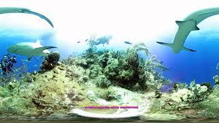 VR Shark Wall, Stuart Cove's Dive Bahamas