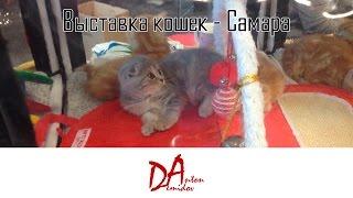 Выставка кошек в Самаре | Anton Demidov