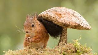 как приготовить грибной порошок/ приправа из грибов на зиму