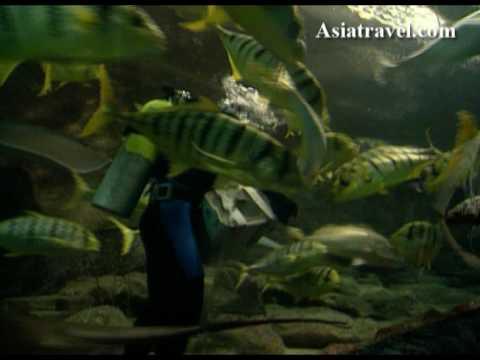 Underwater World, Singapore by Asiatravel.com