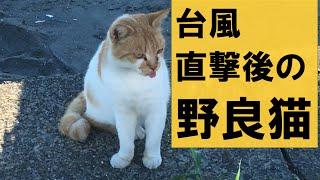 【猫動画】台風一過     野良猫の安否確認 thumbnail