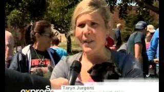 The Pug Olympics (04/10/2013)