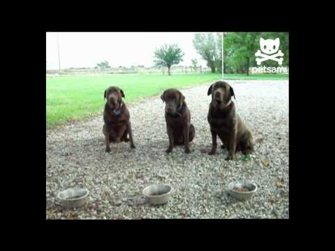 Patient dogs say grace before dinner