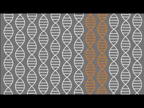 HOW DIOXIN DAMAGES THE HUMAN BODY, 2:56 min, 2006, Shannah Wieser, Carolin Kunstwadl