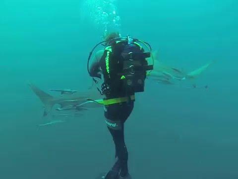 SouthAfrica - Sharkdive at Aliwal Shoal Marine Protected Area (MPA) - SuperMaTo78