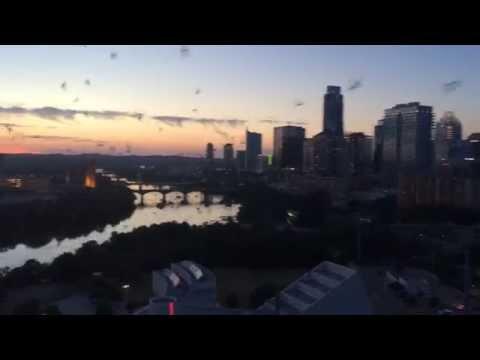 My Balcony View of the Austin Congress Bats from Rainey Street