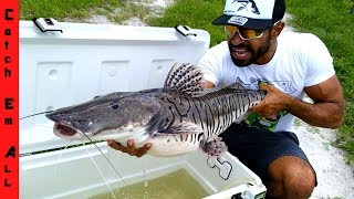 RARE GIANT TIGER FISH CAUGHT in CITY!