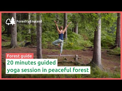 Forest yoga: 20 minute guided class in peaceful forest