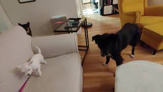 Louisa and Molly standoff