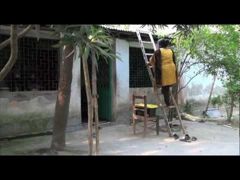 A green initiative brightens Bangladesh