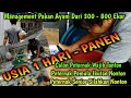 Management Kebutuhan Pakan Ternak Ayam 300, 500 & 800 Ekor Dari Usia 1 Hari - PANEN