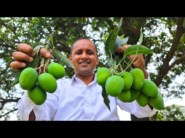 Aam Ka Achar Recipe | Instant Mango Pickle Recipe | Mubashir Saddique | Village Food Secrets