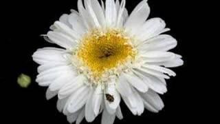 Moonlight Flower _ Michael Cretu