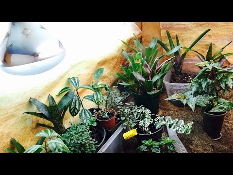 TROPICAL PLANT ROOM TOUR!