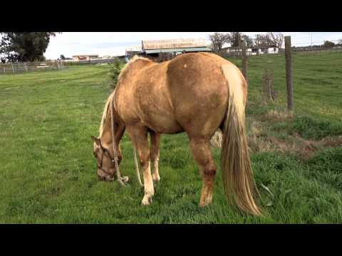 Clinton Anderson tricks people to Buy a Whip that Horses Can't see - Why your Horse won't listen